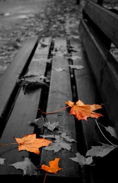 осень золотом отплатит